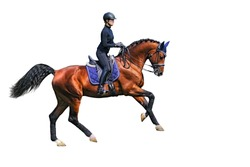 female dressage rider is galloping on bay horse isolated on white background