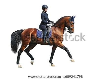 Female dressage rider on bay horse, isolated on white background Stockfoto ©