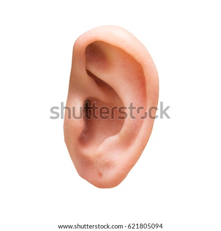 Female ear close-up isolated on a white #621805094