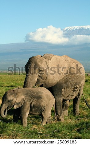 Female elephant and calf