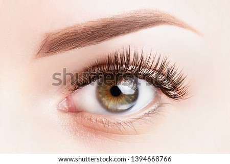 Female eye with long eyelashes. Classic eyelash extensions and light brown eyebrow close-up. Eyelash extensions