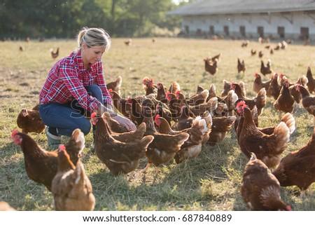 female farmer looking for eggs #687840889