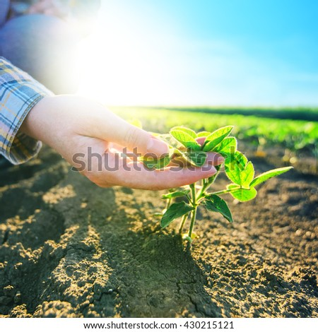 Female farmer\'s hands in soybean field, responsible farming and dedicated agricultural crop protection, soy bean plants growth control, selective focus.