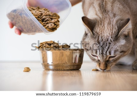 Female feeding her cat. Female hand adding food to cat's bowl