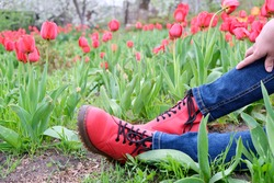Female feet in jeans and red shoes on the ground against a background of red tulips in a spring garden. Photo without face