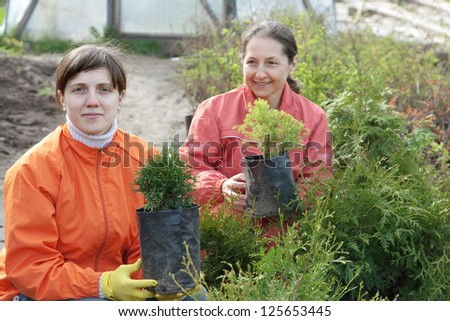 Female gardener with thuya sprouts in pots