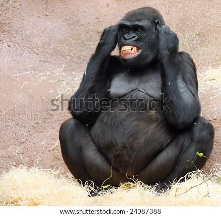 Female gorilla in ZOO Prague - Czech Republic Europe