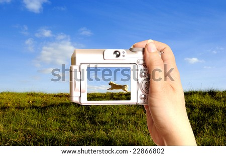 female hand holding a digital photo camera showing on display an happy running dog in a meadow