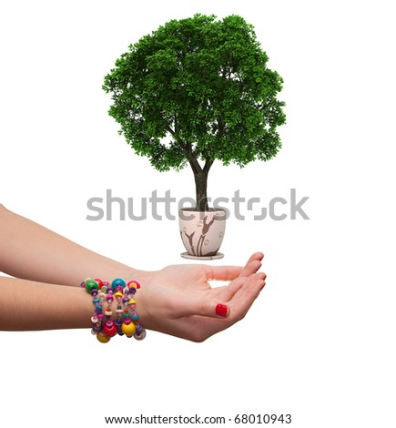 female hand holding a tree in a flowerpot. isolated on white