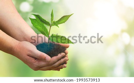 Female hand holding plant growing on soil on a nature background.