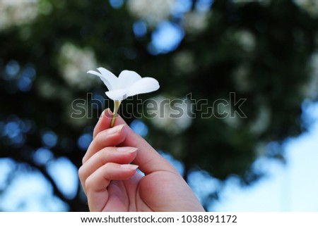 Female hand holds a white plumeria flower in a tropical garden. #1038891172