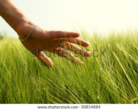 female hand touches ears of wheat