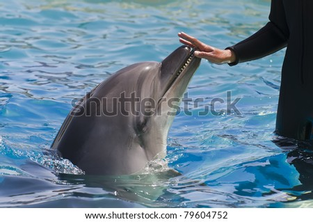 Female hand touching a dolphin