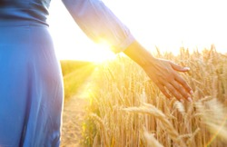 Female hand touching a golden wheat on the field in a sunset light