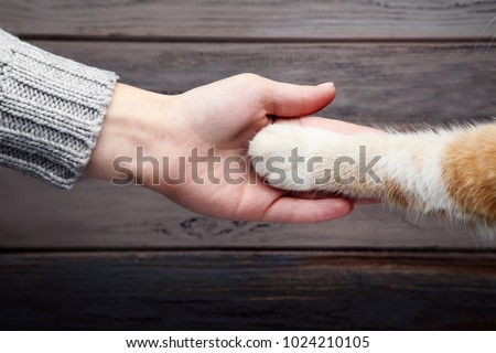 Female hand with cat paw on grey background