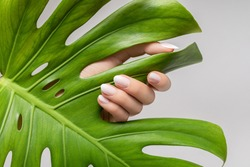 Female hand with pink nail design. Rose nail polish manicure. Female hand hold green leaf on grey background