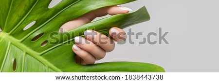 Female hand with pink nail design. Rose nail polish manicure. Female hand hold green leaf on grey background, banner Stock photo ©