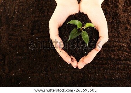 Female handful of soil with small green plant, closeup - Shutterstock ID 265695503