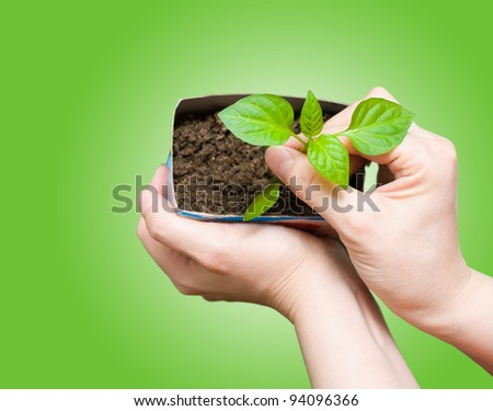 female hands hold a young seedling, over green background