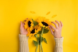 Female hands hold Beautiful fresh bouquet of sunflowers on yellow background