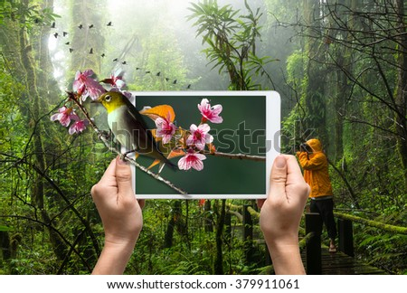 female hands holding a tablet take picture Oriental White-eye bird on Traveller taking photo at Beautiful rain forest, 3d concept