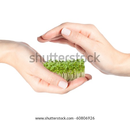 Female hands holding and protecting small seedlings