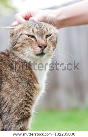 female hands petting a smiling cat outdoors  in a sunny morning