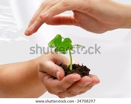 Female hands protecting a small plant