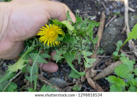 Female Hands Pull Out Weeds From Ground Garden. Weeding Weeds. Struggle Weeds Close Up. #1298818534