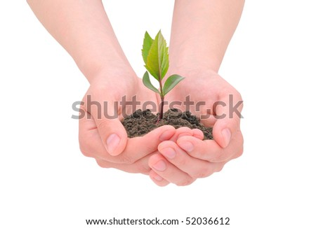 Female hands which holds a blossoming sprout
