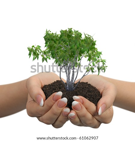 Female hands with soil and a plant. It is isolated on a white background