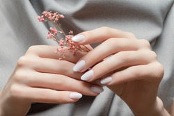 Female hands with white nail design. Female hands holding pink autumn flower. Woman hands on gray fabric background.