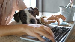 Female Hands Working On Laptop With Cute Dog