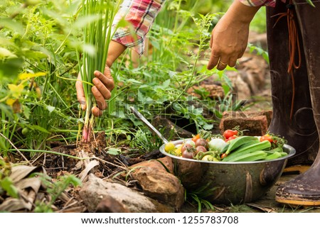 Female harvesting vegetables organic at farm, Harvested season vegetables, Organic farming for healthy lifestyle