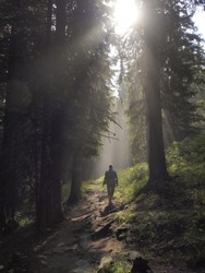 Female hiker walking under the rays of the morning sun in the mountain forest