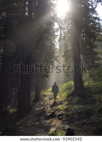 Female hiker walking under the rays of the morning sun in the mountain forest #92402542