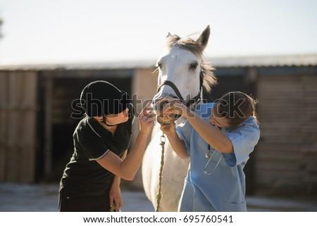 female jockey and vet examining ...