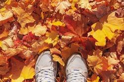 female legs in sneakers on colorful leaves in autumn Conceptual image of legs in shoes on the autumn leaves. Feet shoes walking in nature