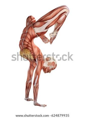 Female Muscle Anatomy Dancing 3d Illustration Ez Canvas