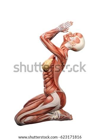 Female Muscle Anatomy Praying 3d Illustration Ez Canvas