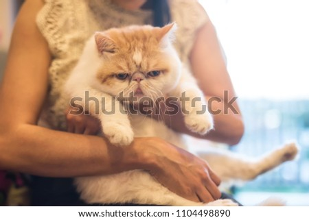 Female owner hug  cute Brown Exotic shorthair cat with copy space for text. Adorable animal or pet inside house or home. best human friend with closeup Portrait.