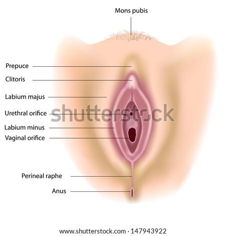 Oma tamponn porno