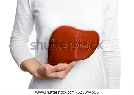 Female person holding red human liver model at white body