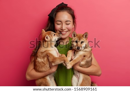 Female pet owner or animal lover holds two shiba inu puppies, expresses care, going to have walk together, feels pleasure from playing with hunting dogs, isolated on pink background, teaches commands
