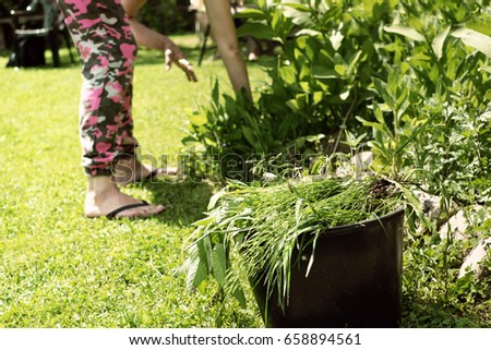 Female pulling the weeds out in a garden, hot summertime day photo #658894561