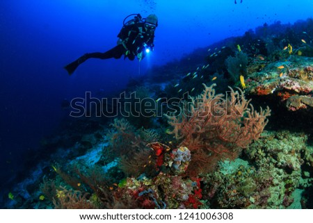 Female SCUBA diver swimming on a tropical coral reef #1241006308