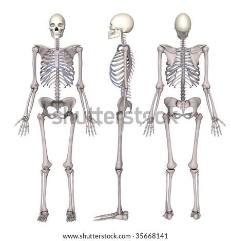 female skeleton