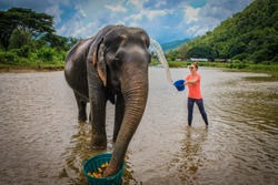 Female tourist baths an elderly female Asian elephant while she eats fruit from a basket in the calm muddy river water  at Elephant Nature Park in Chiang Mai, Thailand