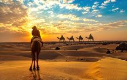 Female tourist on camel safari at the Thar desert Jaisalmer Rajasthan at sunset with view of camel caravan.