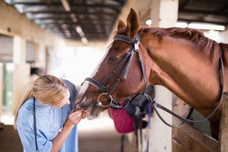 Female vet checking horse teeth while standing in stable